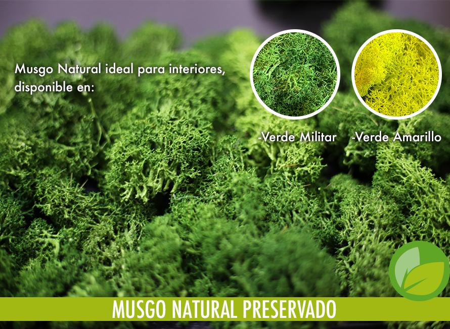 MUSGO NATURAL PRESERVADO