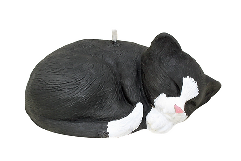 Sleeping Black & White Cat