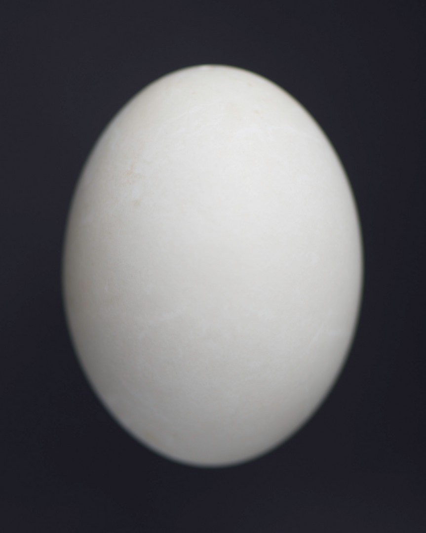 Nick_Horan_OVOID IV.png