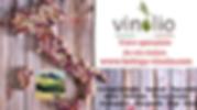 Votre_spéciasliste_du_vin_italien_toscan
