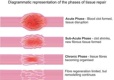 phases of healing.jpg