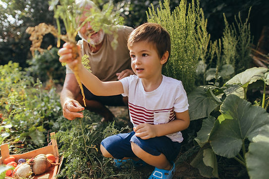 A young white child picking carrots with an older white man.