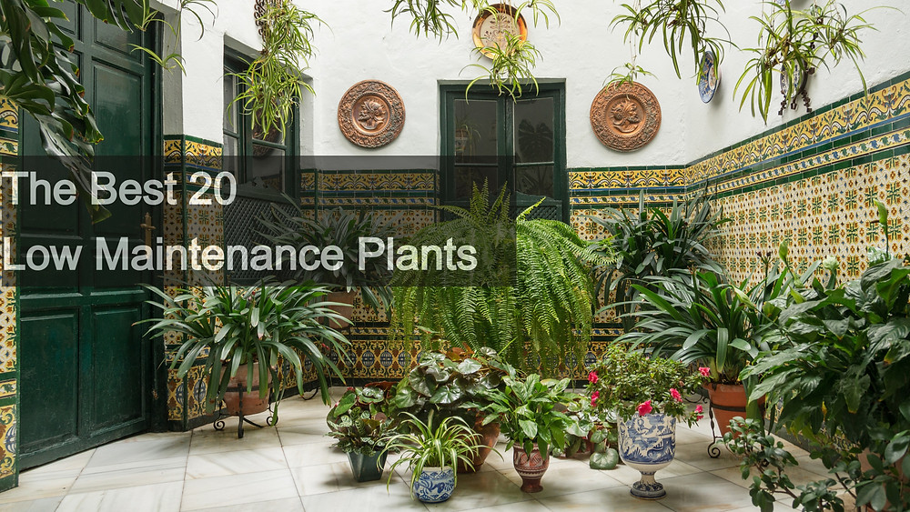 The Best 20 Low Maintenance Plants