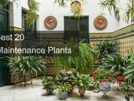 The Best 20 Low Maintenance Plants!