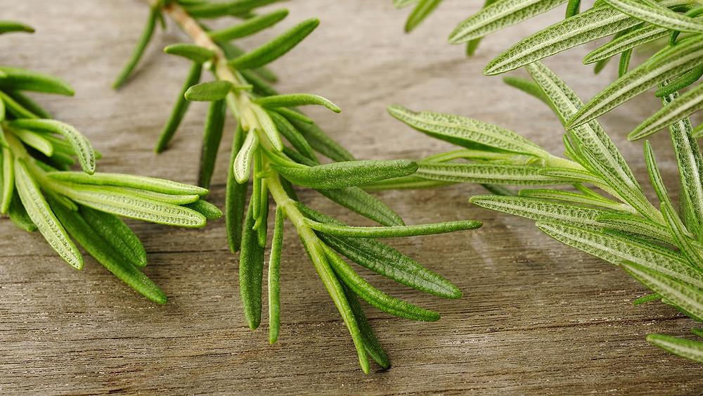 20 Best House Plants - Rosemary