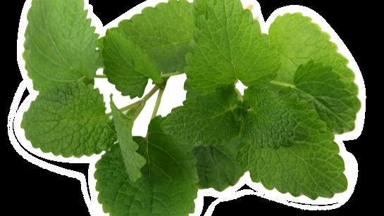20 Best House Plants - Mint