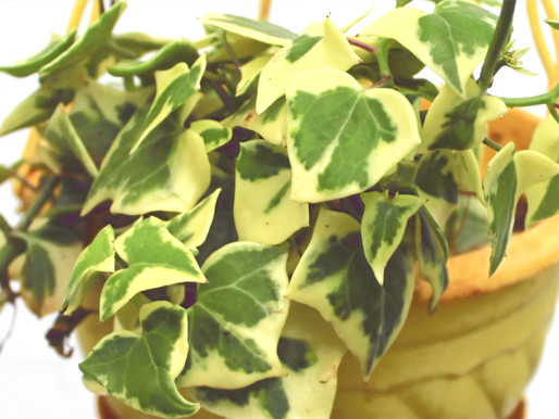 20 Best Air Purifying Plants for a Lively Home