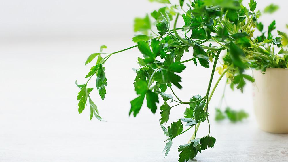 20 Best House Plants - Parsley