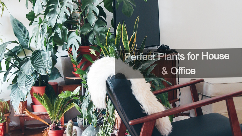 20 Best Indoor Plants