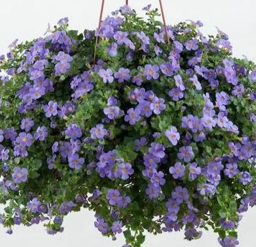 20 Best Creeper Plants