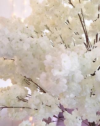 white blossom tree.JPG