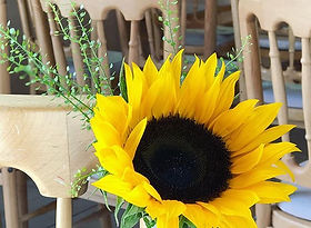 Our sunflower aisle chair decorations cr