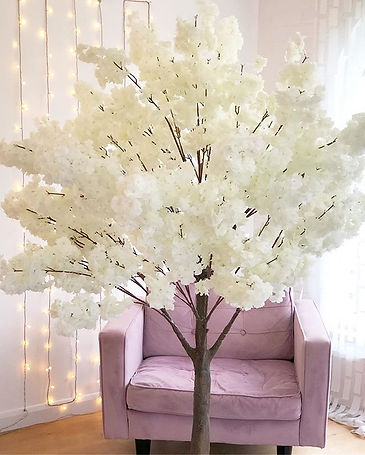 BLOSSOM TREES FOR HIRE __ Beautiful 6' l