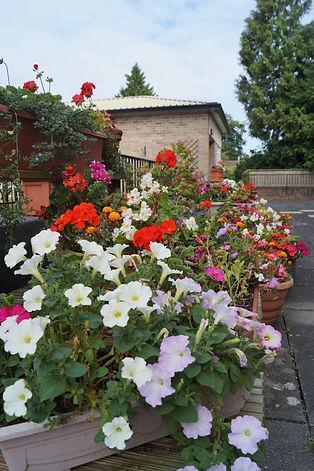 terrace_flowers.jpg
