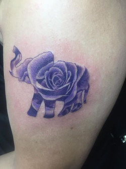 Elephant Rose