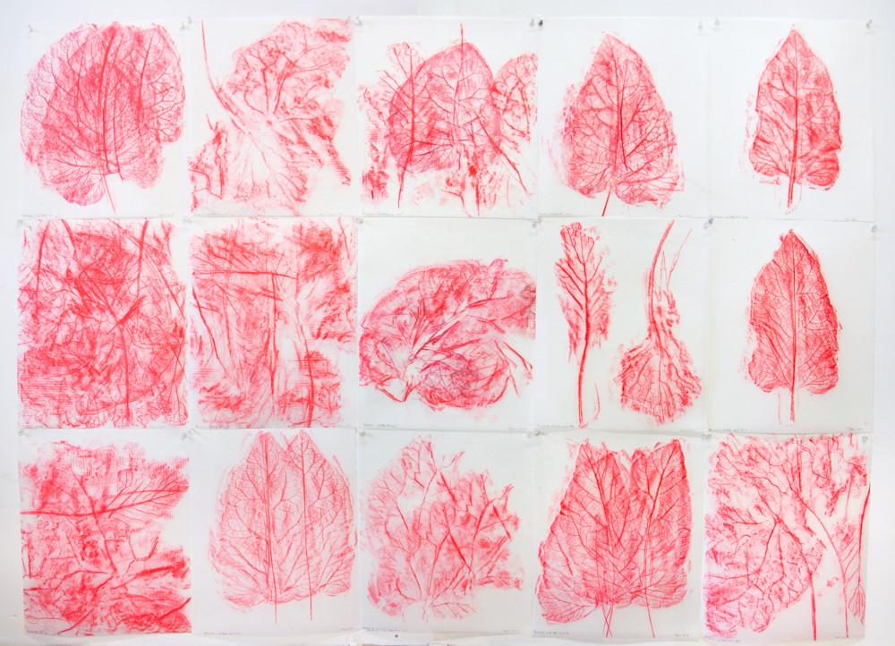 Rhubarb and Kale Series