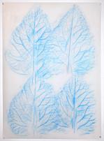 Four Blue Summer Leaves