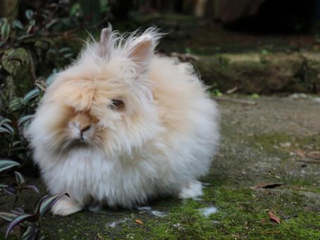 Cuidados sanitários dos coelhos