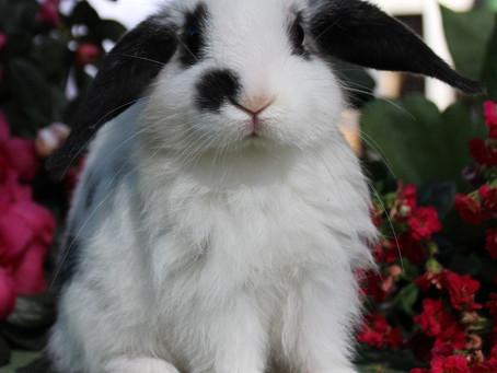 Características dos coelhos