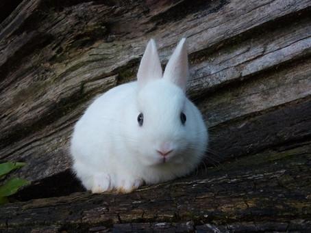 Dicas para cuidar do seu coelho