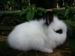 Um pouco de história geográfica sobre os coelhos