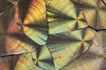 C-vitamin kristályok polarizált fényben