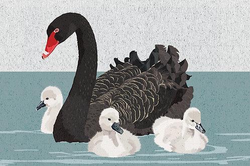 Black Swan with Cygnet Greeting Card