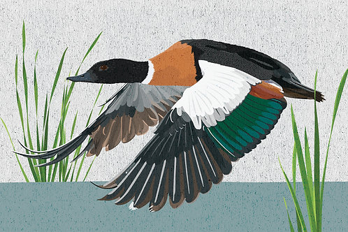 Flying Wood Duck Greeting Card
