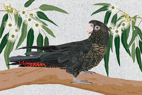 Red Tailed Black Cockatoo Greeting Card