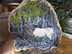 Elk on a conk