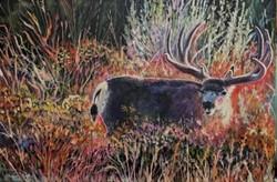wildlife paintings,original deer art