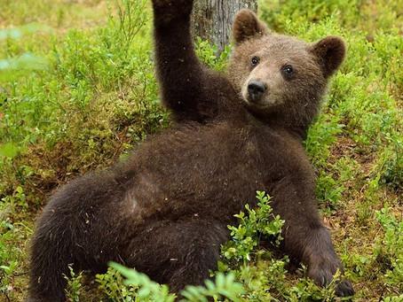 Медвежьи байки