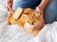 Entretenir le pelage de sont chat