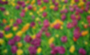 Flower_Power_130x210cm_Öl_auf_Leinwand_2