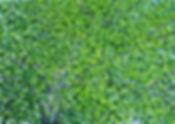 27 Birke 15 Oel auf Leinwand 100x140cm.J
