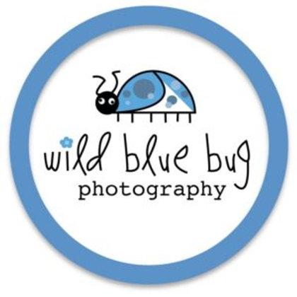 Wild Blue Bug Photography