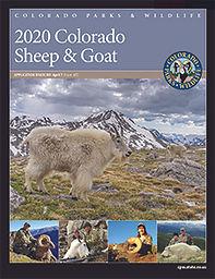 2020 sheep.jpg