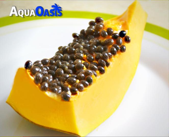 Papaya-AquaOasis.png