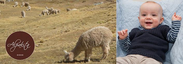 Baby-Alpaka Wolle und Alpaka Royal erkennen und unterscheiden? Ein besonders Alpakavlies besteht aus wertvollen Faser. Wichtiges Fachwissen. Tipps zu Testmöglichkeiten.