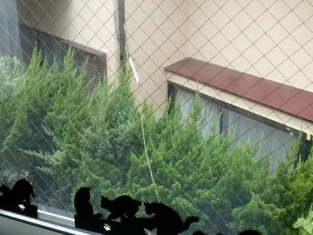 大和市 ペアガラス 割れかえ 網入りのペアガラスにヒビ