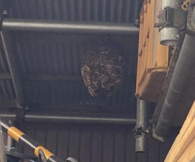 静岡市駿河区 スズメバチ 巣の駆除 資材置き場の天井
