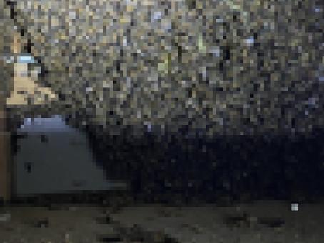 静岡市駿河区 ミツバチ 蜂の巣駆除