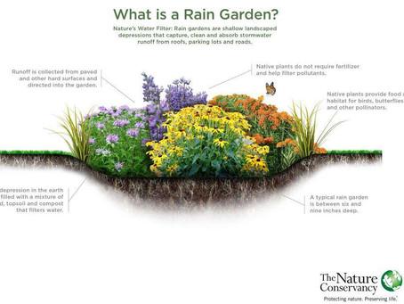 Rain Gardens 101