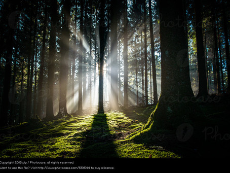 Wilderness Songs