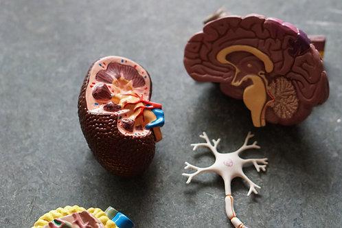 Aula on line 04 - Neuroanatomia e Neurofisiologia aplicadas ao Neurofedback