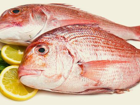 Você conhece peixes?