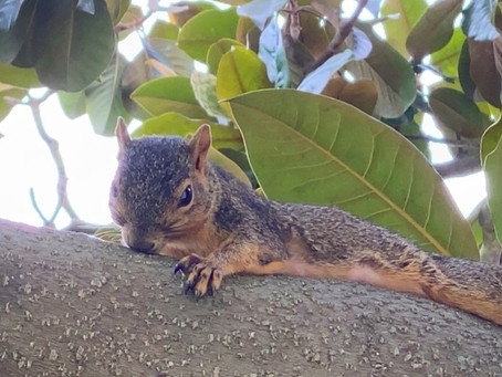 Parks, Trees and Squirrels
