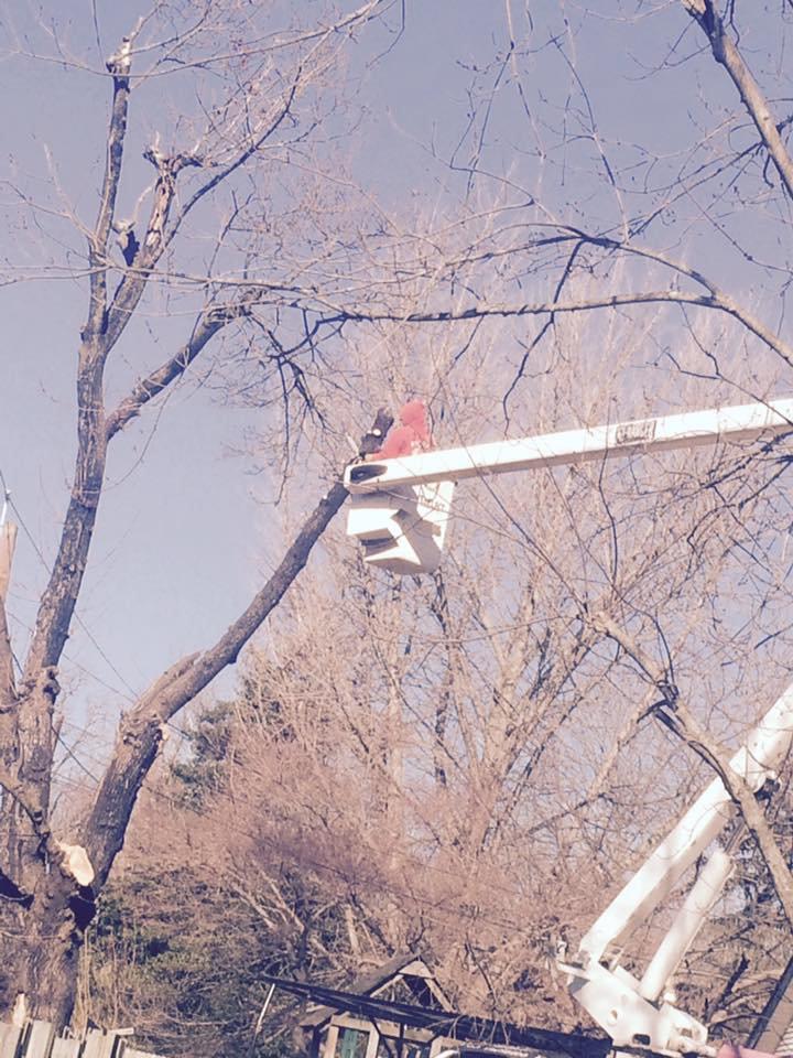 Tree Care Pruning