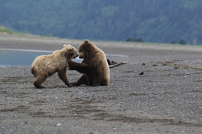 bears-want-in-boat-55.jpg