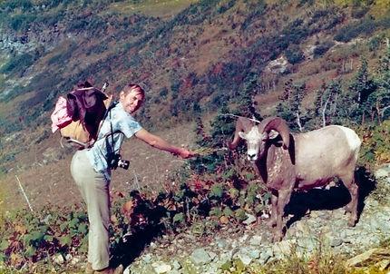 James Bakke Glacier National Park Bighorn Sheep